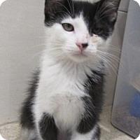 Adopt A Pet :: Choo  $60 - North Richland Hills, TX