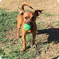 Adopt A Pet :: Petey - Orange, CA