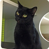 Adopt A Pet :: Papaya - Troy, MI