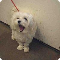 Adopt A Pet :: SANDY - San Martin, CA