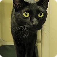 Adopt A Pet :: Isabella - Georgetown, TX