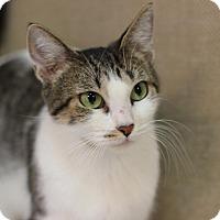 Adopt A Pet :: Tinkerbell - Midland, MI