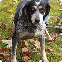 Adopt A Pet :: Blue tick - Cheboygan, MI