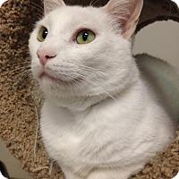 Adopt A Pet :: Mongo - Columbus, OH