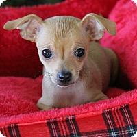 Adopt A Pet :: Rudolf - Yuba City, CA