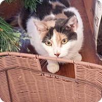 Adopt A Pet :: Delita - Philadelphia, PA