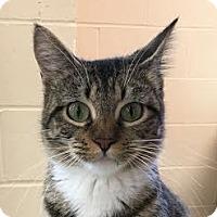 Adopt A Pet :: Wilma - Columbia, IL