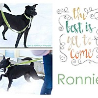 Adopt A Pet :: Ronnie - Clear Lake, IA
