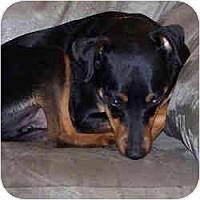 Adopt A Pet :: MAX - Springvale, ME