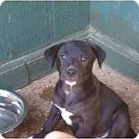 Adopt A Pet :: Daisy Mae - Jackson, TN