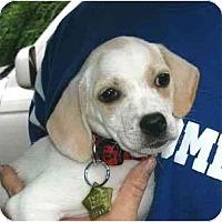 Adopt A Pet :: Pearl - Kingwood, TX