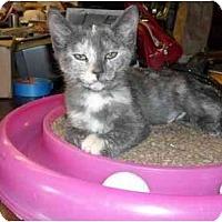 Adopt A Pet :: Kayla - Irvine, CA
