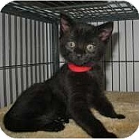 Adopt A Pet :: Twilight - Shelton, WA