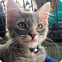 Adopt A Pet :: Elsa - Winchester, CA