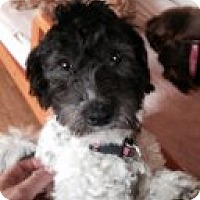 Adopt A Pet :: RICO - Atascadero, CA