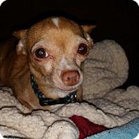 Adopt A Pet :: Haze - Parker, CO