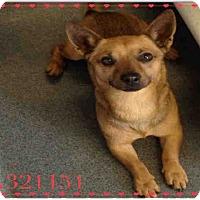 Adopt A Pet :: REDMAN - SAN ANTONIO, TX