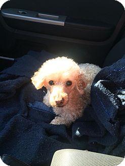 Bowmanville Dog Rescue