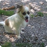 Adopt A Pet :: Gizmo - Hazard, KY