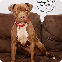 Adopt A Pet :: Patricia - Apache Junction, AZ
