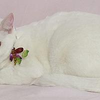 Adopt A Pet :: Ann - Kerrville, TX