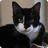 Adopt A Pet :: Hoover - Waco, TX