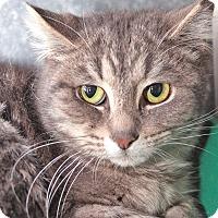 Adopt A Pet :: Turnip - Wyandotte, MI