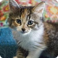 Adopt A Pet :: Dandelion - Savannah, GA