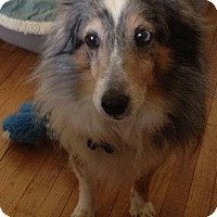 Adopt A Pet :: Paisley - Alden, NY