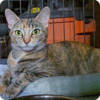Adopt A Pet :: Missy - Bronx, NY