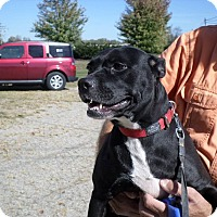 Adopt A Pet :: Maggie - Pataskala, OH