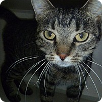 Adopt A Pet :: Tippy - Hamburg, NY
