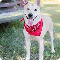 Adopt A Pet :: Katiyana - Hope Mills, NC