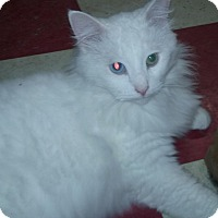 Adopt A Pet :: Flinton - Berkley, MI