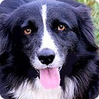 Adopt A Pet :: RAIN(LOST HER FAMILY--PLS READ - Wakefield, RI