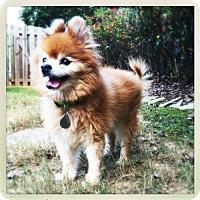 Adopt A Pet :: Podie - Atlanta, GA