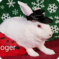 Adopt A Pet :: Roger - Williston, FL