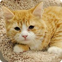 Adopt A Pet :: Lil Bit - Horn Lake, MS