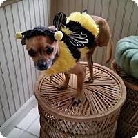 Adopt A Pet :: Austin - Mukwonago, WI