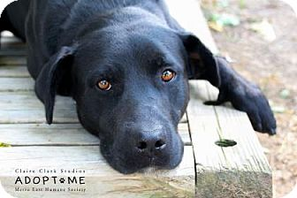 Labrador Retriever Mix Dog for adoption in Edwardsville, Illinois - rambo