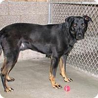 Adopt A Pet :: Snoop - Ruidoso, NM
