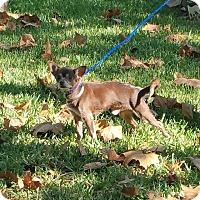 Adopt A Pet :: VAN DAMME - Houston, TX