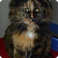 Adopt A Pet :: Grizzabella - Hamburg, NY