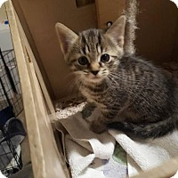 Adopt A Pet :: Alex - Florence, KY
