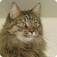 Adopt A Pet :: Shena - Ridgway, CO
