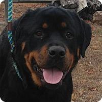 Adopt A Pet :: Roxie - Washington, DC
