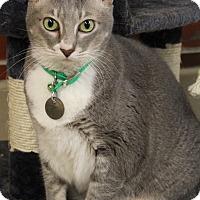 Adopt A Pet :: Kat - Bradenton, FL