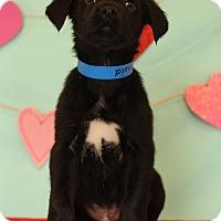 Adopt A Pet :: David - Waldorf, MD