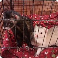 Adopt A Pet :: Mickey - Navarre, FL