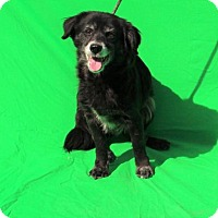 Adopt A Pet :: Dena - Thomasville, NC